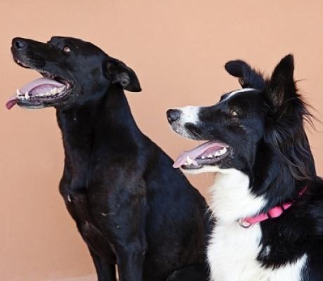 PET THERAPY - Al via corso di Formazione per Interventi Assistiti con gli Animali