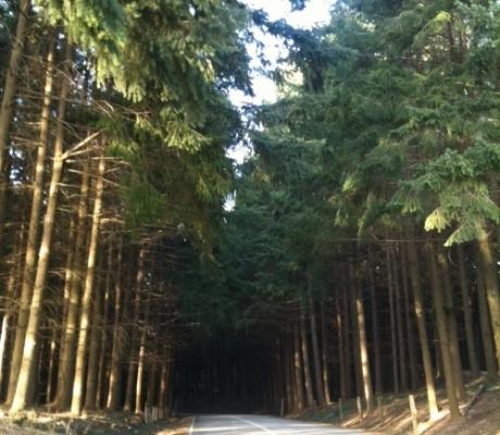 II Congresso Selvicoltura Firenze: ricominciare a dare valore al bosco