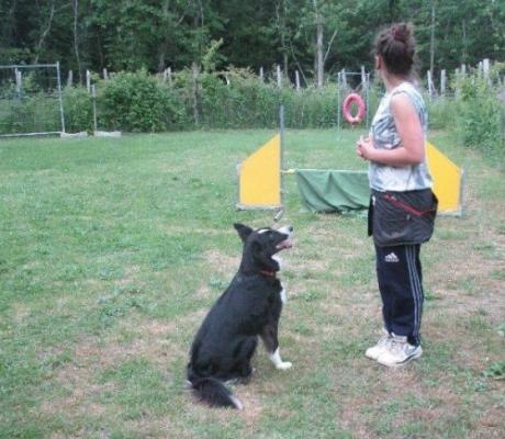 Diventare addestratore per cani, corso di formazione teorico pratico riconosciuto ENCI