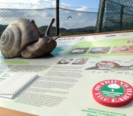 """""""Salviamo le chiocciole d'Italia"""", un progetto per la conservazione di due specie di molluschi della Toscana"""