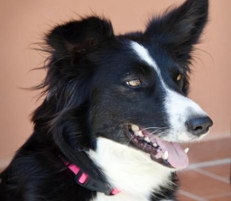 Pet Therapy, dalla Toscana la spinta per la definizione giuridica delle professionalità