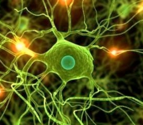 NEUROLOGIA - Numeri allarmanti in Italia per le malattie neurodegenerative
