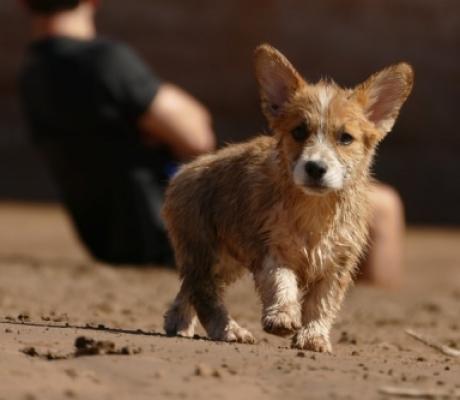 Dalla Toscana una App per il ritrovamento degli animali in caso di smarrimento