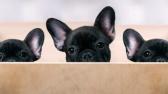 Animali: è boom di dog sitter, massaggiatori e toelettatori. 26 Agosto Giornata Mondiale del Cane