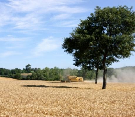 Imu agricola e montana, i Comuni della Toscana dove non si pagherà