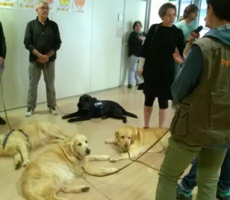 Pet Therapy - Cani nel reparto rianimazione, prima esperienza in Italia