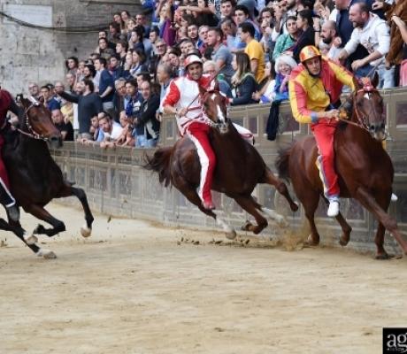 SIENA - Palio straordinario, vince la Tartuca con il cavallo scosso - IMMAGINI