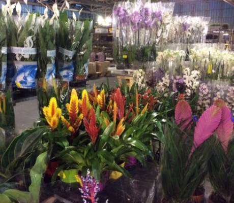 FLOROVIVAISMO: 30 aprile - 11 maggio 2015 al parco delle Cascine FloraFirenze
