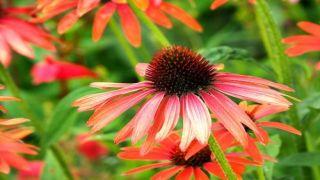 Prurito, congestione nasale, congiuntivite e mal di testa. Come difendersi dalle allergie ai pollini