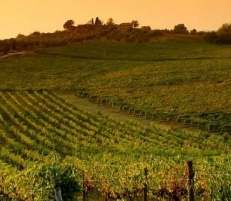 I Consorzi di Tutela Vini della Toscana contro il Piano di Indirizzo Territoriale toscano
