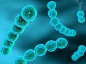 TOSCANA - Meningite C, per contenere diffusione raccomandata le vaccinazione