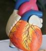 Con il Covid-19 quasi dimezzati i ricoveri per infarto miocardico acuto in Italia