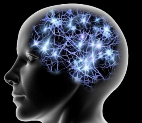 NEUROSCIENZE - Il cervello e il senso del numero, nuove ricerche su capacità di pianificare sequenze di azioni